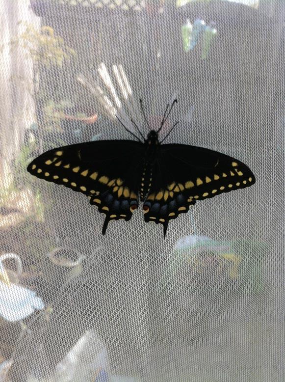 ButterflyLR